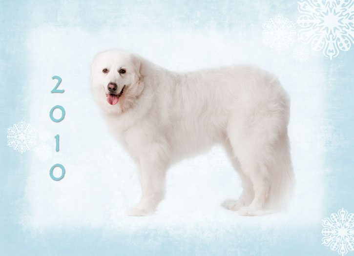 Dogs That Look Like Polar Bears Name